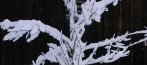 Schnee2_klein