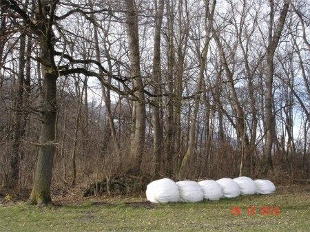 Siloballen auf einem Pufferstreifen am Waldrand