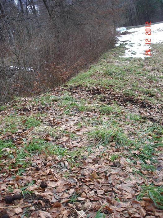 ... ein langer grüner Wall, das üppige Wachstum von Gräsern deutet auf eine gute Nährstoffversorgung hin ...