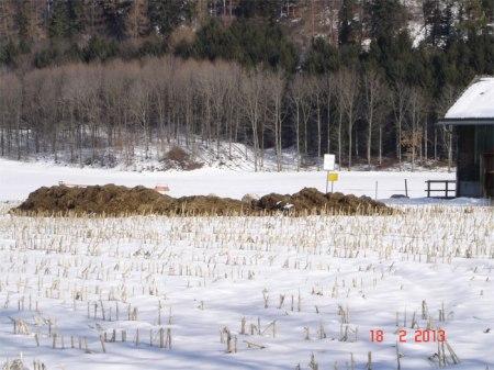 Güllegruben drohen zu bersten, Mistlager sind voll oder gar nicht vorhanden. Mist auf abgeerntetem Maisfeld: Ausdruck von Misswirtschaft