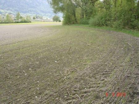 Wiesenstreifens zwischen Maisacker und Mühlbach
