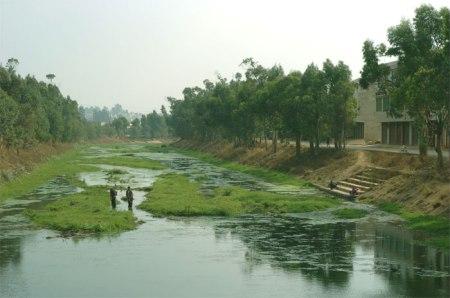 Üppiges Grün in einem Fluss in China. Auf intensiv bewirtschafteten Feldern wird 30 bis 60 Prozent mehr Stickstoffdünger eingesetzt als nötig wäre.