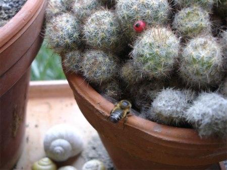 Eine Biene fliegt zum Erdloch am Topfrand.