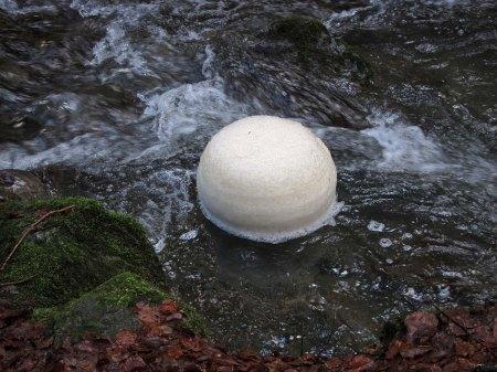 """""""Luxemburgerli"""" mit einem Durchmesser von mindestens 40 cm. Foto Arno Gross"""