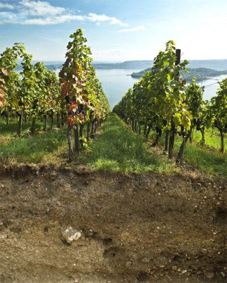 Rebbergböden sind unter Druck. Vielfältig sind die Gründe: Siedlungsdruck, Erosion ... Foto: © Agroscope (Gabriela Brändle, Urs Zihlmann), LANAT (Andreas Chervet)