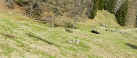 ... viele kleine Misthaufen irgendwo in der Landschaft ...
