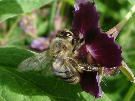 Neonicotinoide töten nicht nur Bienen, auch Kleintiere im Wasser sterben.