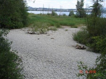 Das mit Steuergeldern revitalisierte Lachner Aahorn ist ohne sichbares Wasser. So können sich Flora und Fauna nicht entwickeln.