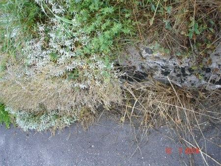 ... Trockenheit hört vor Zierpflanzen auf ... was soll das bedeuten ... ?