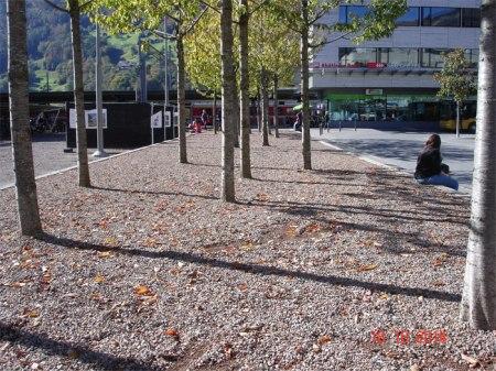 Der erhöhte Platz mit den Bäumen auf dem Bahnhofplatz Landquart -  wo Kinder spielen und Durchreisende picknicken - wird mit Herbiziden unkrautfrei gehalten, obwohl dies strengstens verboten ist.