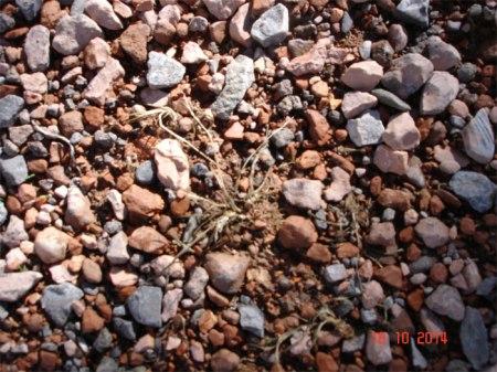 Ein Monat nach dem Gifteinsatz: Hier und da noch Reste der vergifteten Pflanzen.