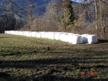 ... Siloballen auf dem Pufferstreifen neben einer Hecke oberhalb Trimmis am 16.1.11.