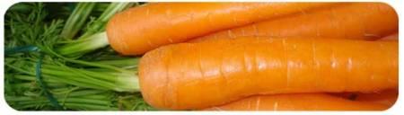 Zum Beispiel Karotten aus dem nahen Bauernhof.  Foto P2R