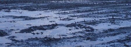 Die Erde eines Maisackers ist meist ein halbes Jahr lang unbedeckt der Witterung ausgeliefert. Bodenverdichtung, -verschlämmung, Nährstoffauswaschung, Erosion ...