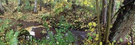 Laub in Bächen liefert Energie und Nährstoffe für Wasserorganismen. Auch in angrenzende Landökosysteme liefern Bäche viel Energie und Nährstoffe, z.B. über den Schlupf von Insektenlarven, die ihrerseits Futter für Amphibien oder Fledermäuse sind. Das Foto zeigt den Hainbach bei Frankweiler zur Zeit des Laubfalls. Foto: Jochen Zubrod, Universität Koblenz-Landau