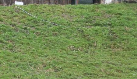Abwasserschlauch: Kurz zuvor lag noch Schaum auf der grünen Wiese...