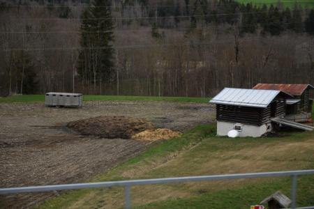 Mist auf nacktem Maisfeld. Wahrscheinlich fliesst zwischen Stall und Feld ein Bächlein; das würde bedeuten, dass der Pufferstreifen zu schmal ist. Copyright Marius