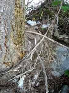 In Klosters und Schiers GR wurde beim Unwetter 2005 die alte Abfalldeponie weggeschwemmt. Nach Jahren sah Heidi noch Spuren von Plastik, Blech, Glas usw.