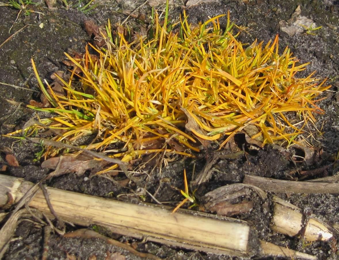 """""""...Glyphosat = Totalherbizid, bringt alle Pflanzen vom Leben zum Tod – ausser den so beschworenen, gentechnisch veränderten. Deren Einführung allerdings hat dann resistente """"Super-Unkräuter"""" und """"Killer-Insekten"""" zur Folge...."""" Weiterlesen bei Osmerus:  Der orange Blitz – Agrar-Frühling aller Orten. https://osmerus.wordpress.com/2014/03/23/der-orange-blitz-agrar-fruhling-aller-orten/  23. März 2014, Copyright  osmerus"""