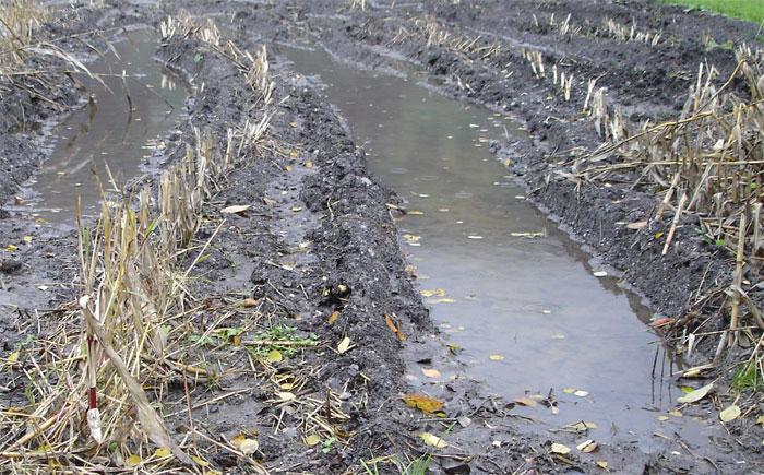 ... Schwere Maschinen verdichten den Boden. Die Lebewesen im Boden leiden an Sauerstoffmangel oder sterben. Hingegen bilden Bakterien mehr Lachgas, was die Klimaerwärmung fördert. Gehemmt ist die Grundwasserbildung, entsprechend mehr Niederschlagswasser fliesst oberflächlich ab und kann Gewässer verschmutzen ...