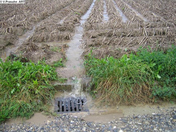 ... Wenn ein Gewitterregen auf den Boden nieder prasselt, schwemmt das Wasser kostbare Erde, Dünger und Pflanzenschutzmittel vom Feld; so geht laufend Boden verloren, und oft werden Gewässer verschmutzt. Copyright Volker Prashun, Agroscope, https://picasaweb.google.com/106794471444272716353/32ErosionFolgenOffsiteGewasser#5308305906817119650 ...