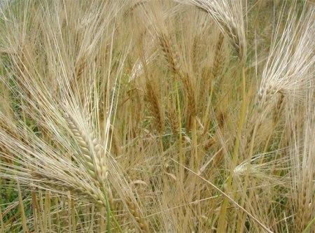 Grundwasserschutz Birrfeld: Acker oder Wiese ist hier die Frage.