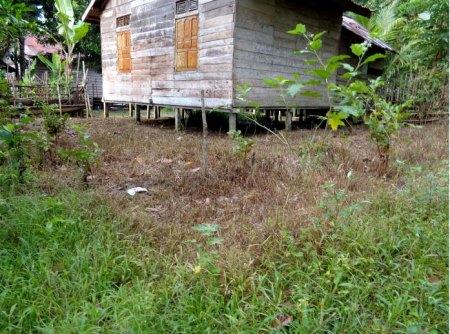 Herbizide sind in Kalimantan (Borneo) allgegenwärtig, auch rund ums Haus. Copyright Foto: Franz J. Steiner.