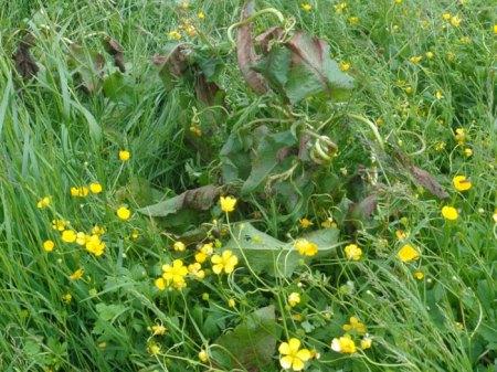 """Unkrautbekämpfung mit einem selektiven Herbizid auf einer Alp. Das ist ein """"überflüssiger"""" Gifteinsatz, denn eine angepasster Nutzung und Weidepflege sind nachhaltig im ursprünglichen Sinn dieses Unworts."""