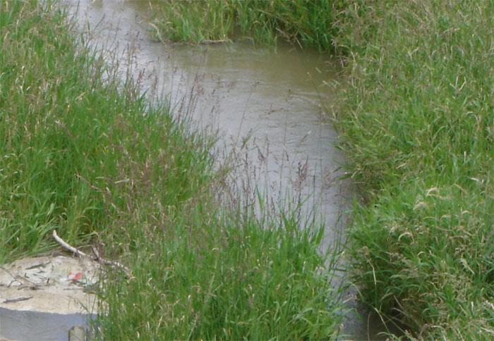 Besonders in den Monaten Juni und Juli ist die Konzentration von Pflanzenschutzmitteln in viele kleinen Gewässer hoch.