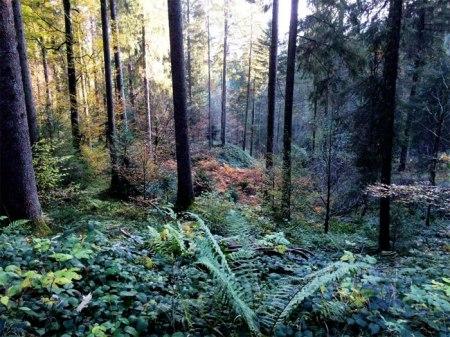 """Zur Aufmunterung: Ein Herbst-Stimmungsbild vom Wald der Korporation Oberägeri, oberhalb """"im Gutsch"""". Copyright: Erika."""