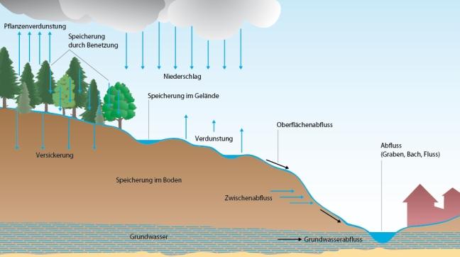 Grundwasser bildet sich vor allem durch Versickern von Niederschlagswasser. Grafik: Claus J. Lienau, München, © Quelle: Bayerisches Landesamt für Umwelt; einmaliges Nutzungsrecht für diese Veröffentlichung erteilt durch LfU.