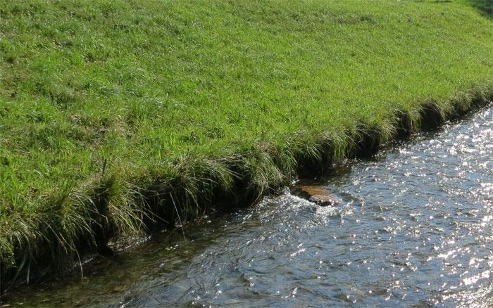 Seit 1.1.14 Pufferstreifen-Messung ab Uferlinie statt ab Böschungsoberkante wie international üblich.