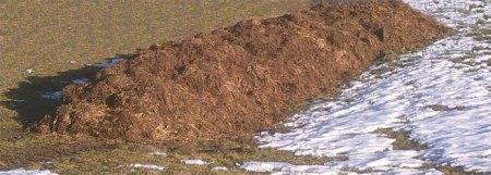 """Mist in luftiger Höhe in """"West-Graubünden"""", Bergzone IV. Mitte Dezember hingelegt, das hat Spuren hinterlassen; der Haufen bleibt wahrscheinlich einige Monate ungedeckt hier auf der Wiese liegen. Copyright Seraina. Oben im Bild hat Heidi die wunderschöne Aussicht wegretouchiert."""