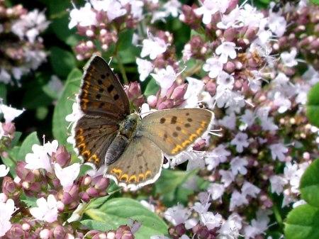 Es fällt Leuten, welche noch nicht in der 'Stadt Schweiz' wohnen, auf, wenn Schmetterlinge verschwinden. Doch wer beachtet das Sterben von Wassertierchen, Algen...?