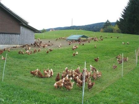 Hühner mit Auslauf im Appenzellerland. Foto: Heidi