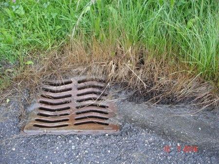 Gemeindeangestellte haben an dieser entwässerten Strasse illegal Herbizid eingesetzt, und zwar nicht nur gegen Problemunkräuter, sondern gegen alles. Dies ist umso verwerflicher, als die Gemeinde für den Vollzug verantwortlich ist bzw. wäre!