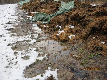 Ein Bio-Bauer in Malans GR baute vor einigen Jahren einen Stall auf freiem Feld, ohne Mistlager. Er ist nicht der Einzige! Jahr für Jahr liegt daher Mist mehrere Monate lang lausig gedeckt im Feld, der Witterung ausgesetzt, das Grundwasser gefährdend. Seit 2010 fotografiert Heidi seine Misthaufen. Diesen Mist hat der Bauer Mitte Dezember 2015 hierher transportiert. Er liegt also bereits seit gut zwei Monaten da, zur Hälfte im Gewässerschutzbereich Ao, d.h. im Uferbereich der Landquart, zur Hälfte im Gewässerschutzbereich Au.