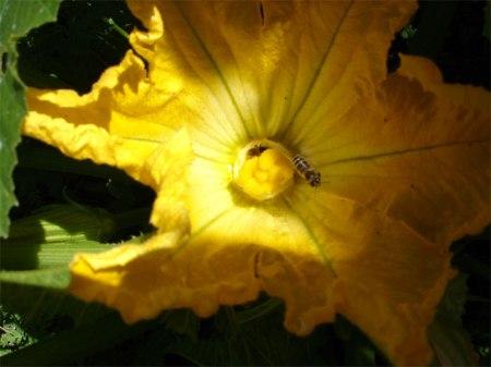 Blühende Pflanzen in der Nähe von Feldern fördern Nützlinge und Insekten, welche die Kulturen bestäuben.