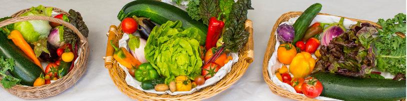 Wie und wo sollen unsere Lebensmittel produziert werden?