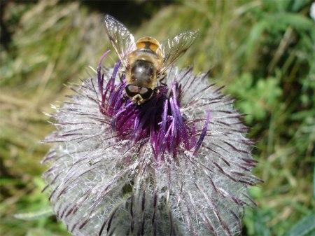 In dieser Waldwiese sind die Bienen sicher vor Pflanzenschutzmitteln.