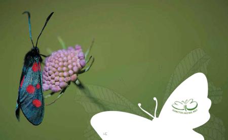 Der Schmetterling gilt als Symbol für Freiheit, Buntheit und intakte Natur. Copyright: hans perting, buchwerkstatt.
