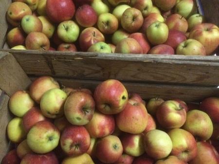 """Ein Bauersohn schrieb Heidi: """"Ja oft ist es so, dass Früchte (und wahrscheinlich noch mehr Gemüse!) auf dem Feld verfaulen. Das trifft man aber auch in ärmeren Ländern an. Die Konsumenten sind zu weit entfernt, es fehlen Transportmöglichkeiten, sie haben kein Geld usw. Oder bei uns rentiert es nicht, diese zu ernten. Die Grossverteiler wollen nur einwandfreie Ware, keine Flecken usw. Mein Bruder, der einen Biobetrieb bewirtschaftet, versorgt jedes Jahr die ganze Verwandtschaft mit Bio Äpfel und Birnen, welche für den Markt zu wenig schön sind. Sie sind halt nicht mit Chemie behandelt! Weil der Mostobstpreis schlecht ist, verfüttert er den Rest den Rindern. Aber unser Keller ist halt auch nicht mehr so kalt wir früher!"""""""