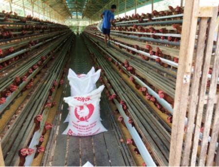 Die Hühner werden mit vorgemischtem importiertem Futter gefüttert.