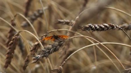 """Bild aus dem Dokumentarfilm """"Révolution silencieuse"""" von Lila Ribi."""