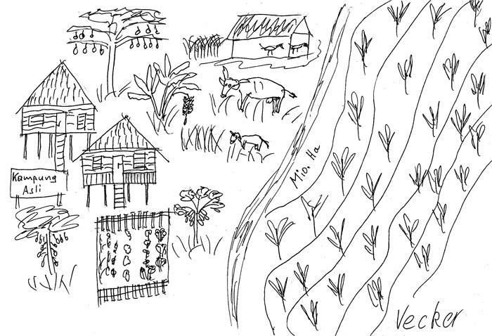 Links: Vielfältige Landwirtschaft mit Kapok, verschiedenen Bananenarten, einigen Unterarten des ertragreichen Jackfruchtbaums, im Überfluss Papaya, Gemüse. Überschüssige Jackfrüchte werden dem Vieh verfüttert. Rechts: Palmöl-Plantage. Pestizide gelangen durch Abschwemmung, Abdrift und Erosion in den Fluss. Copyright: Vecker.
