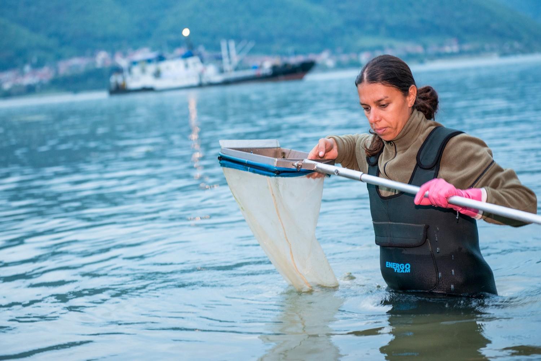 Bei Forschungsexpeditionen wie hier an der Donau werden tausende Proben zusammengetragen und später analysiert. Foto: UFZ / André Künzelmann