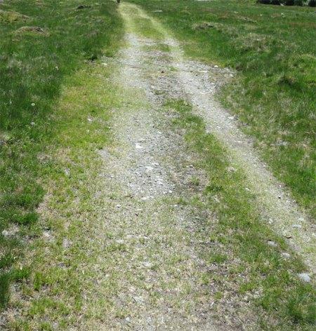 Der Weg zur Alp Novai ist breiter geworden. Herbizid hilft!