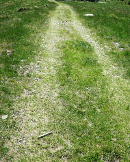 Weiter auf dem Herbizid-Trail zur Alp Novai.