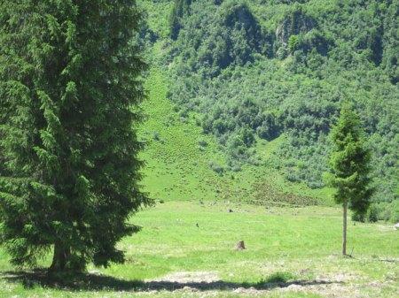 Blick von der Alp Garfiun: mit Herbizid behandelte Farne und unbehandelte. Hier oben wurde schon lange keine Weidepflege mehr gemacht.