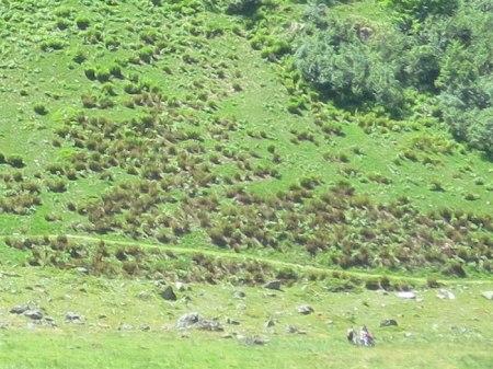 Auf der anderen Talseite: Der Herbizid-Trail zur Alp Novai.